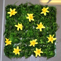 Grass Squares with Daffodils